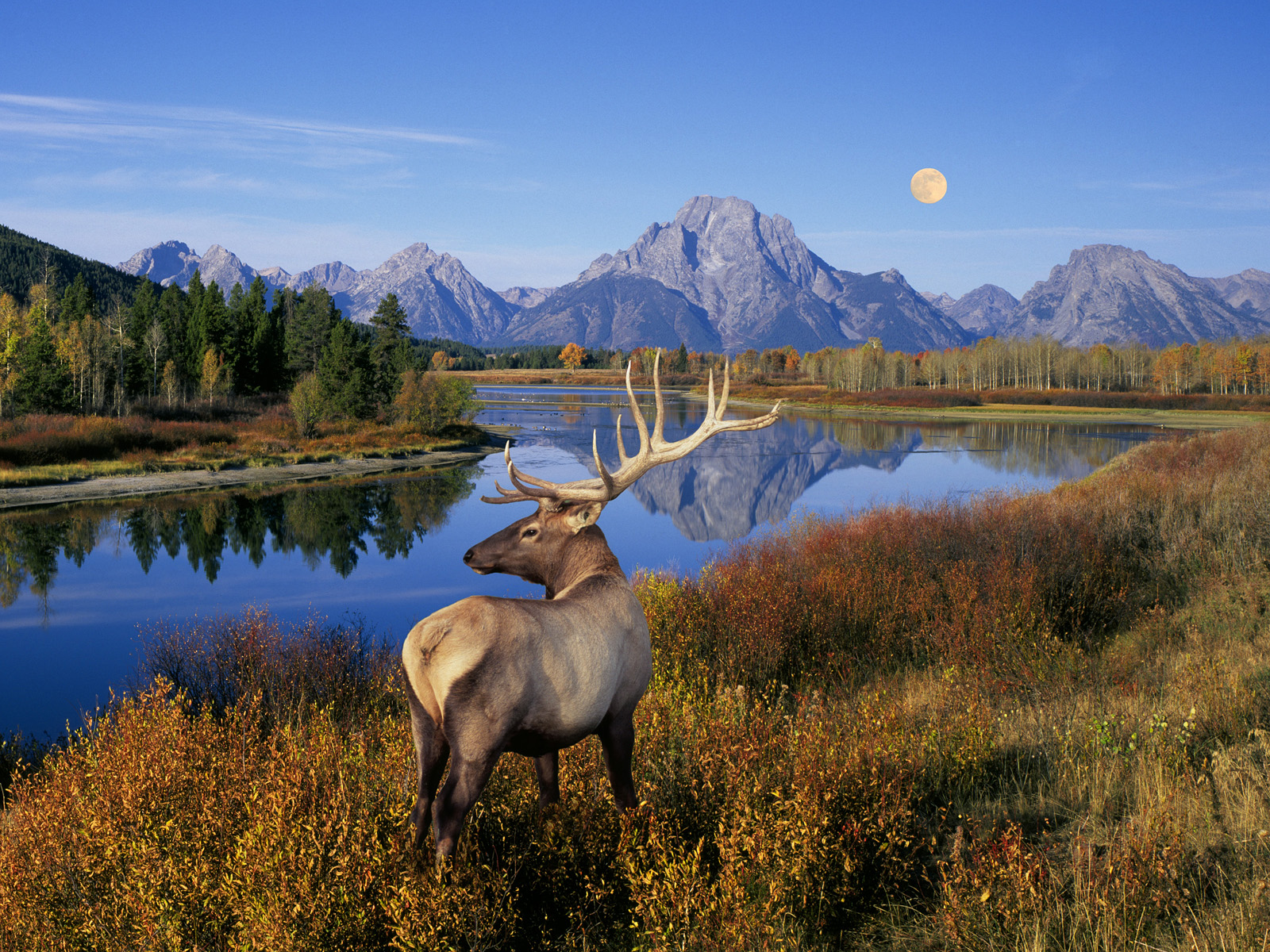 US National Parks - Us national parks yellowstone
